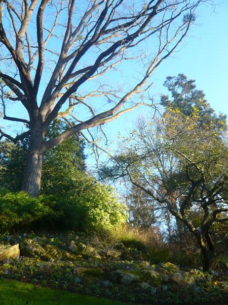 Jardin-des-Plantes,-Angers-(5)