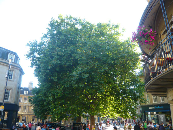 Kingsmead-Square,-Bath-(2)