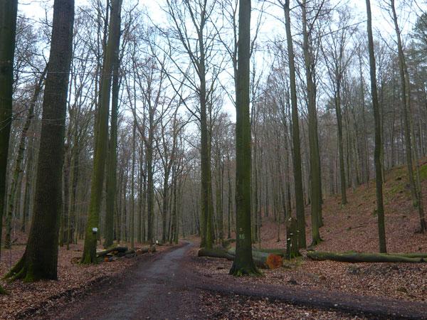 La-Forêt-de-Soignes,-Bruxel