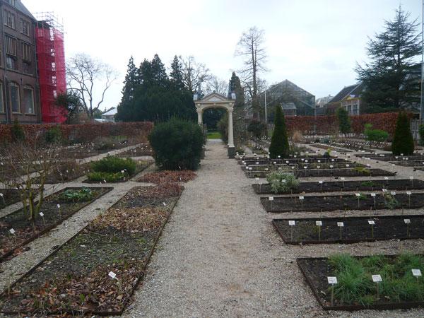 Hortus-Botanicus,-Leyde-(1)