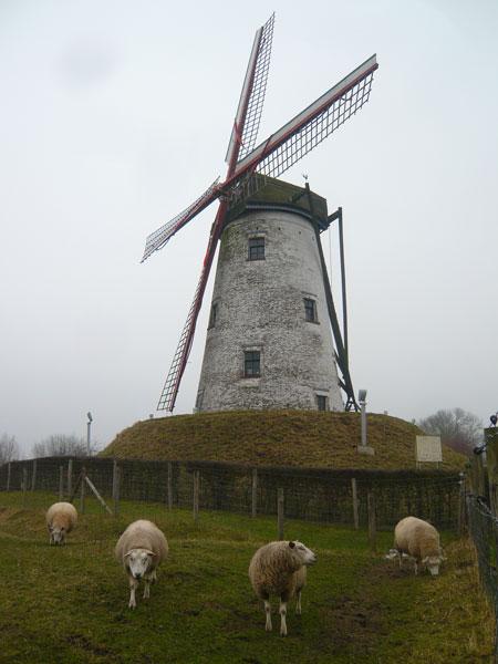 Moutons-et-Moulin-Noorweegs
