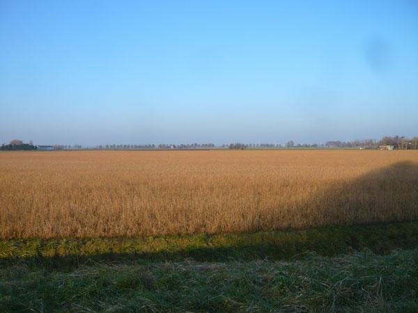 Paysage-Oudennhoorn