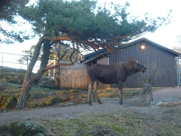 Elans-au-Slottsskogens-Park