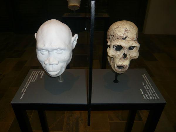 Crânes-et-reconstitution,-M