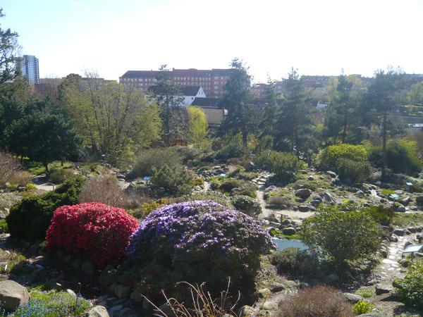 JardinBotanique,-Aarhus-(2)