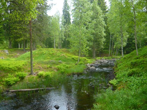 Paysage-forêt-verte,-Säters