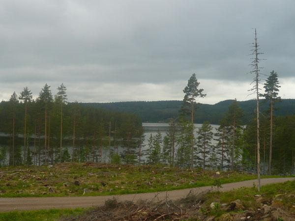Paysage-lac-Björkljustern,-
