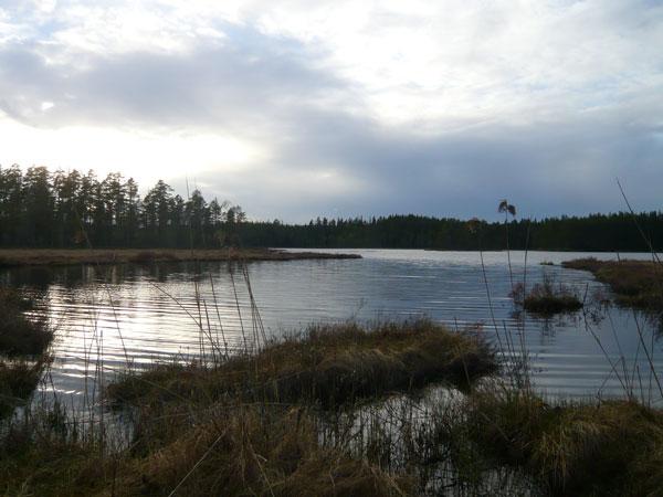 Paysage-lac-Kättbosjön-(1)