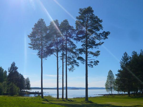 Paysage-lac-Siljan,-Tallber