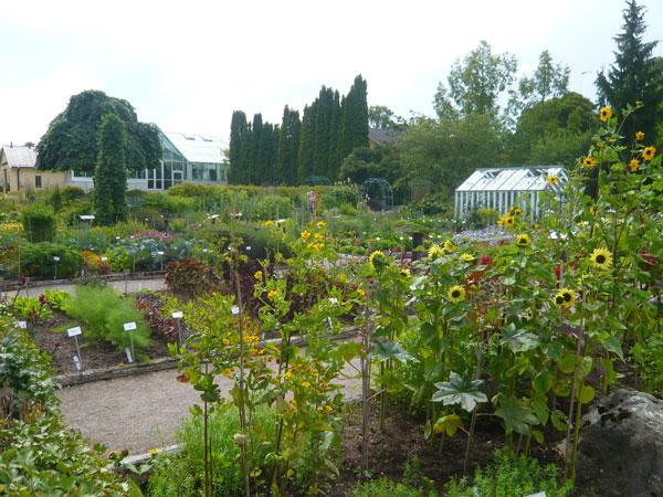 Jardin-Botanique,-Uppsala-(