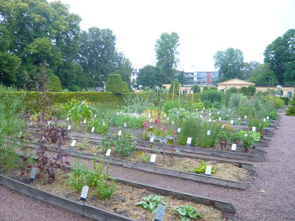 Jardin-Linné,-Uppsala-(1)