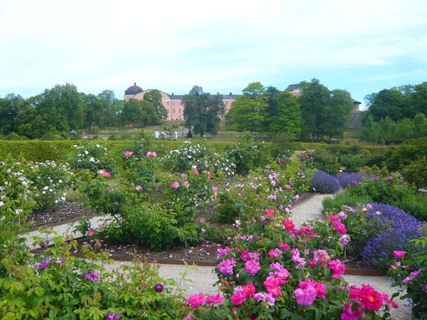 Roseraie-du-Jardin-Botaniqu